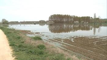 La Comunidad de Regantes del Rio Riaza, preocupados por los terrenos anegados ya sembrados