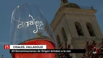 La D.O. Cigales se suma al Día Movimiento Vino junto a otras 24 denominaciones del país