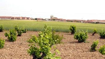 La Ruta del Vino Cigales suma dos nuevos municipios y potencia 'Los viñedos del Pisuerga'