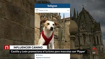 El primer perro turista empieza su gira en Salamanca
