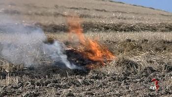 Pocas quemas y tardías