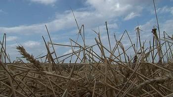 El pedrisco ha dañado más de 60.000 hectáreas en Palencia, según Asaja