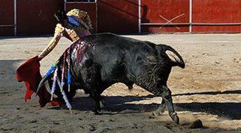 La ofensiva antitaurina de Pedro S�nchez da�a a algunos alcaldes socialistas de Castilla y Le�n