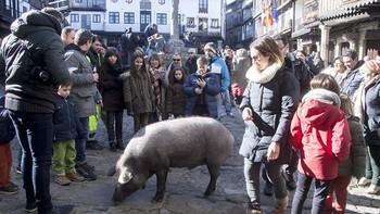 Y al cerdo le llegó... su San Antón