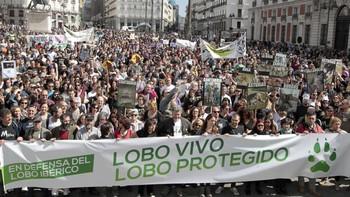 Miles de personas piden en Madrid la declaración del lobo como especie 'estrictamente protegida por ley'
