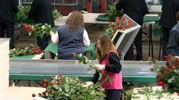 Aleia Roses ampliará su invernadero en Garray, Soria, y firma con UGT un convenio específico