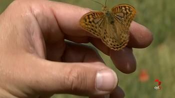 Palencia presume de mariposas