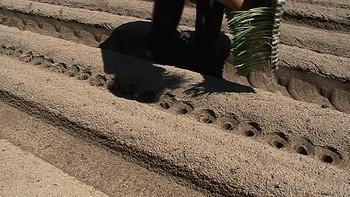 Plantaci�n de puerros, agricultura de precisi�n del siglo XXI