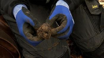 Comprar un kilo de trufa esta campaña puede costar hasta 1.800 euros, por la sequía