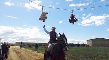 Defensa Animal Zamora denuncia una carrera de gallos cruenta en Montamarta, Zamora