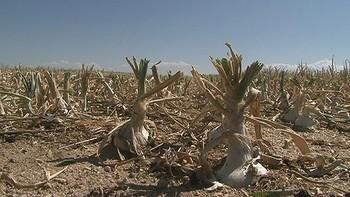 La plantación de la cebolla en La Moraña se retrasa