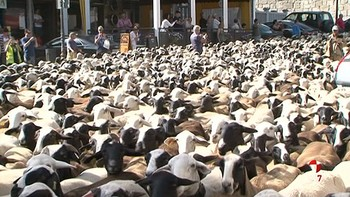 Puebla de Sanabria se inunda de ovejas en busca de los pastos de alta montaña