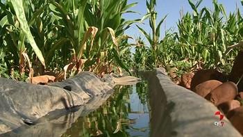 La CHD cierra el grifo a cuatro comunidades de regantes del Bajo Duero