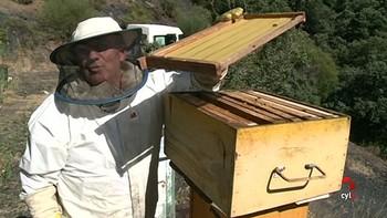 Amarga cosecha de miel en León por falta de agua