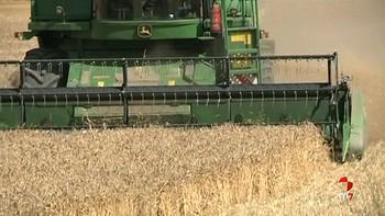 Los agricultores manifiestan su preocupación por el precio del cereal