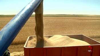 El 90 por ciento del cereal ya ha sido cosechado en Castilla y León