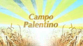 Campo palentino