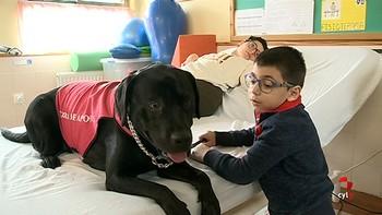 Un perro labrador ayuda a alumnos del colegio de Íscar
