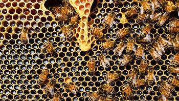 Detienen a un hombre e investigan a una mujer, ambos de Soria, por hurtar 310 colmenas y útiles de la apicultura por valor de 60.000 euros