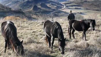 La Montaña Palentina apuesta por la recuperación de especies autóctonas