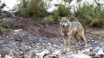 Sin acuerdo sobre los efectos de la prohibición de cazar en fincas privadas de parques nacionales