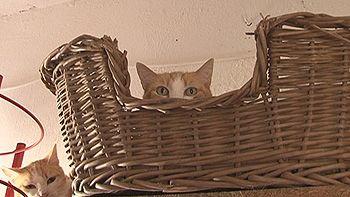 La proliferaci�n de gatos en �vila preocupa a la protectora de animales