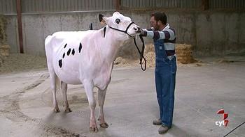 Romina no es una vaca cualquiera