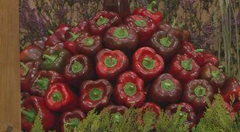 Los productores de pimiento de El Bierzo exhiben en Carracedelo su producto