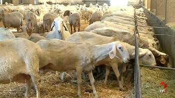 El sector del ovino sale a la calle
