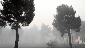 Ecologistas en Acción propone incluir en la Red Natura 2000 el espacio afectado por el incendio de La Cabrera