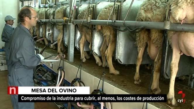 La industria de ovino de leche se compromete a suscribir contratos que cubran costes de producción