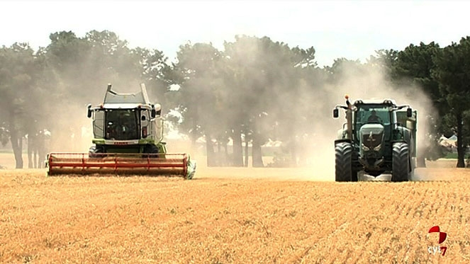 Castilla y León anticipa 790 millones en ayudas de la PAC a 69.000 agricultores y ganaderos